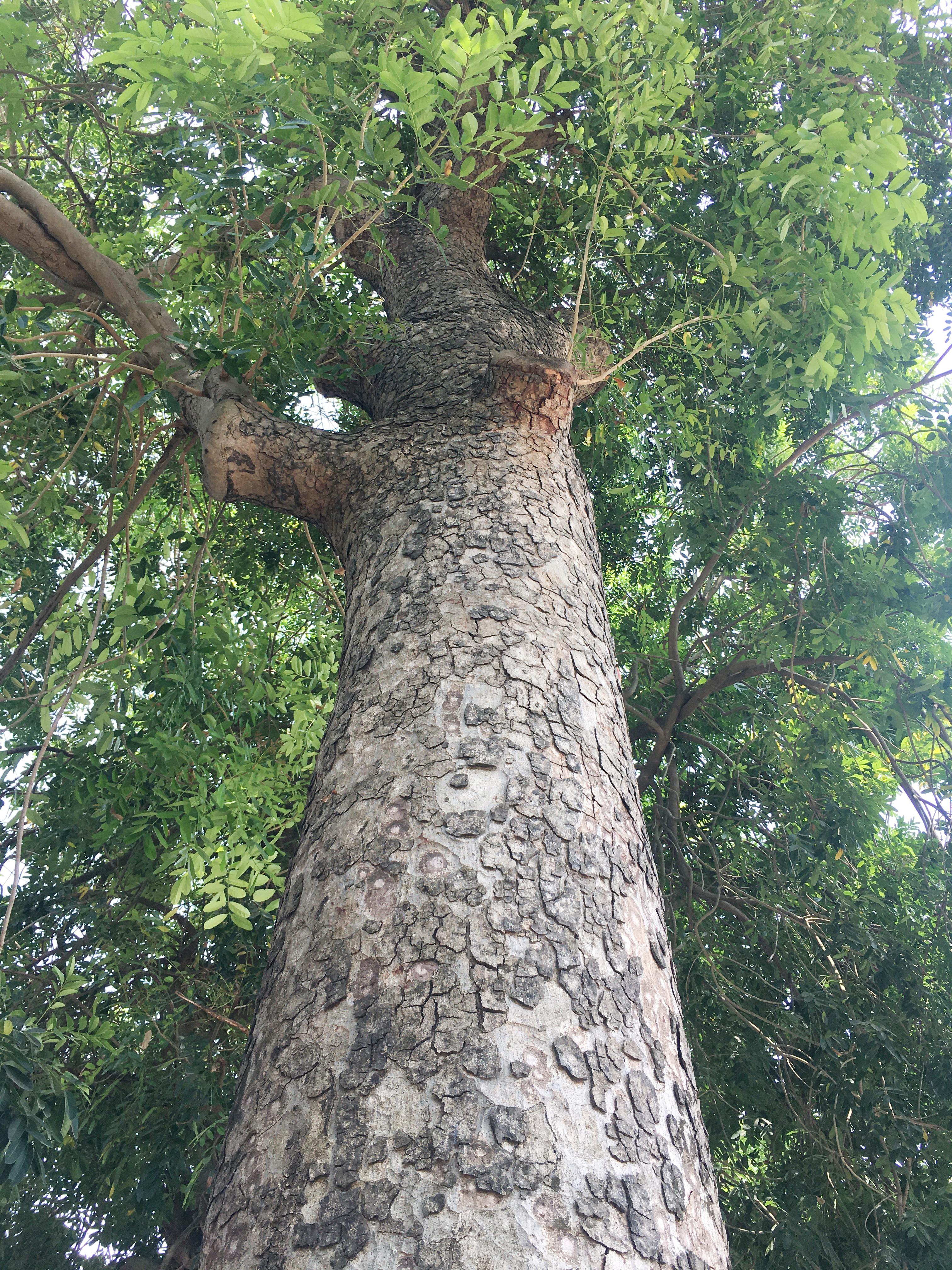 Một thân gỗ tự nhiên trong rừng nguyên sinh